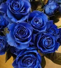 zumari 100 semillas de flores de rosa azul