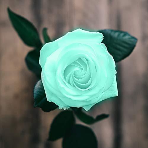 LPxdywlk 100 Unids/Bolsa Semillas De Rosas Dulces Fácil De Plantar, Planta Perenne Verde Bonsai Semillas De Flores De Rosa Set Para Jardín Patio De Casa Ventana Patio Semillas de rosa azul