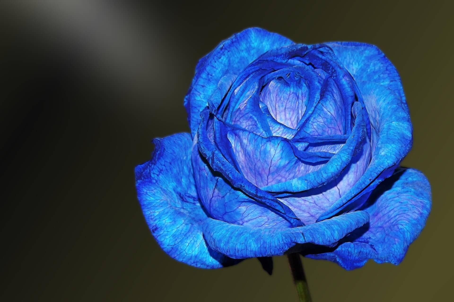 Foto Rosa Azul