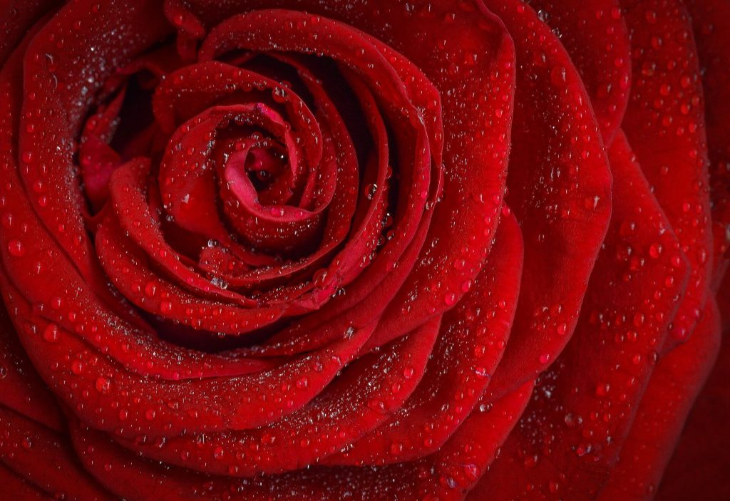 Foto Rosas de Colores