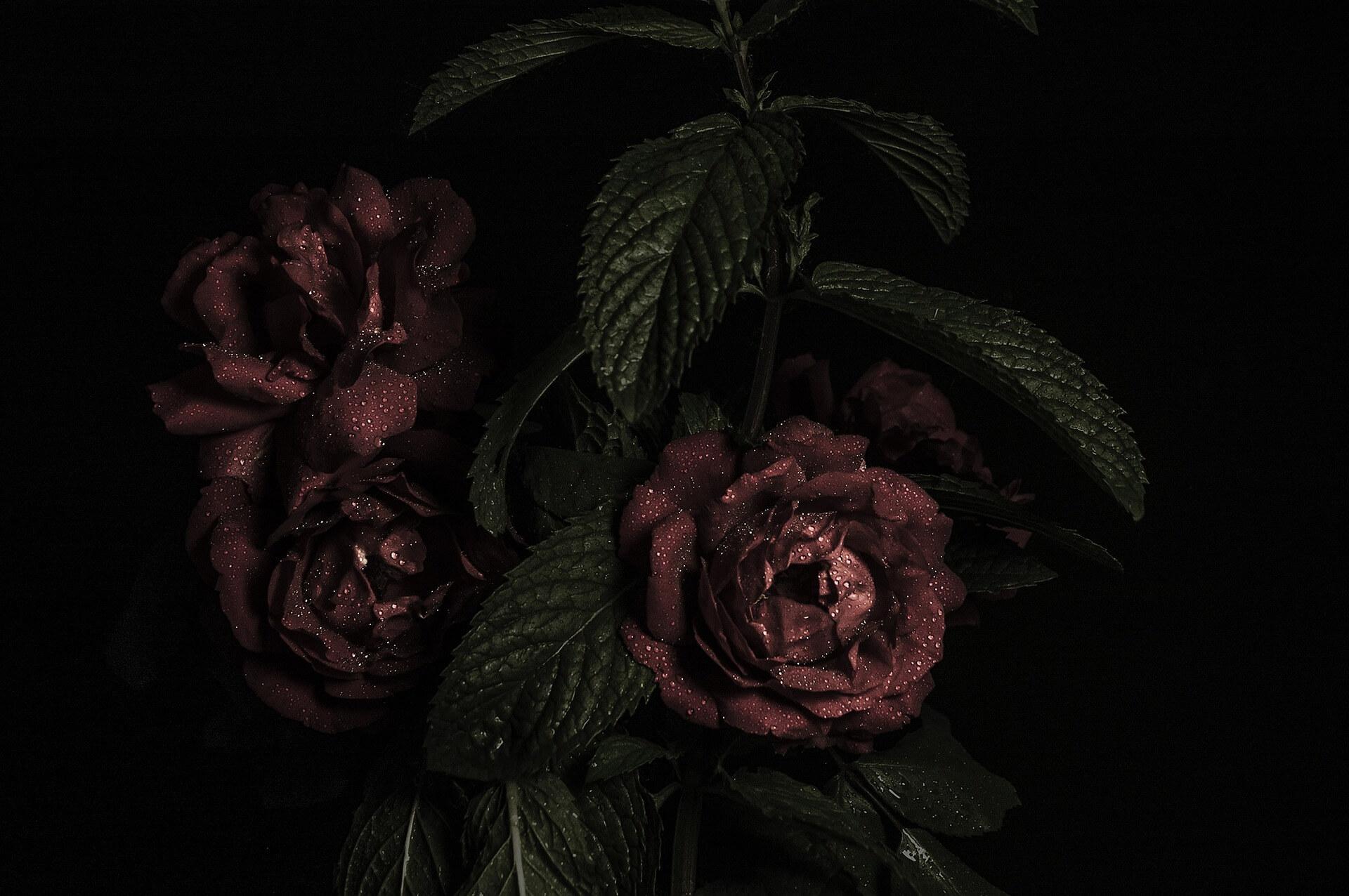 Foto de 3 rosas rojas en blanco y negro con el fondo negro